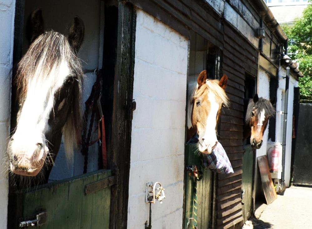 Wimbledon Ridgway Riding Facility Stables Horses Petition Lady Wimbledon