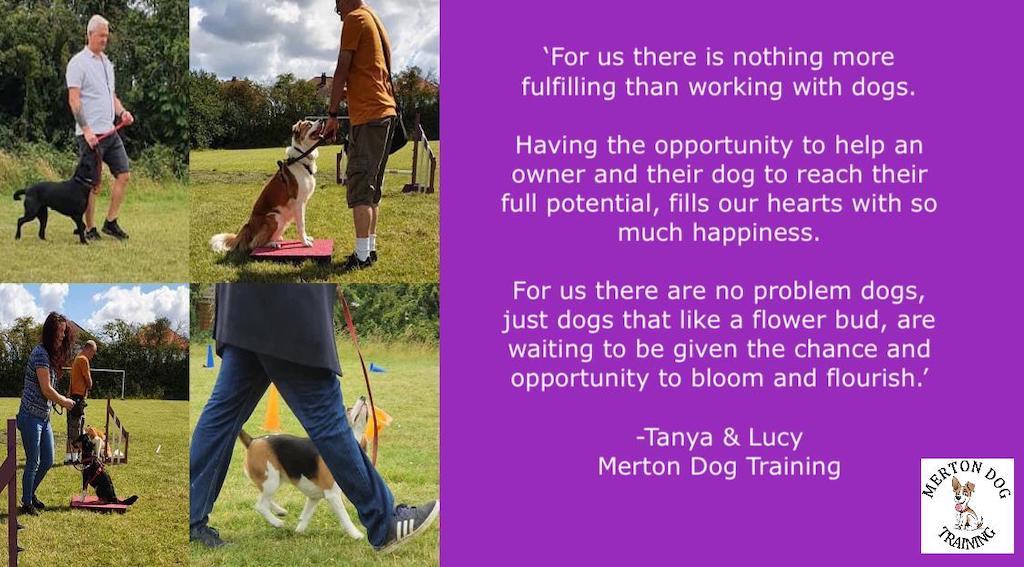 Merton Dog Training
