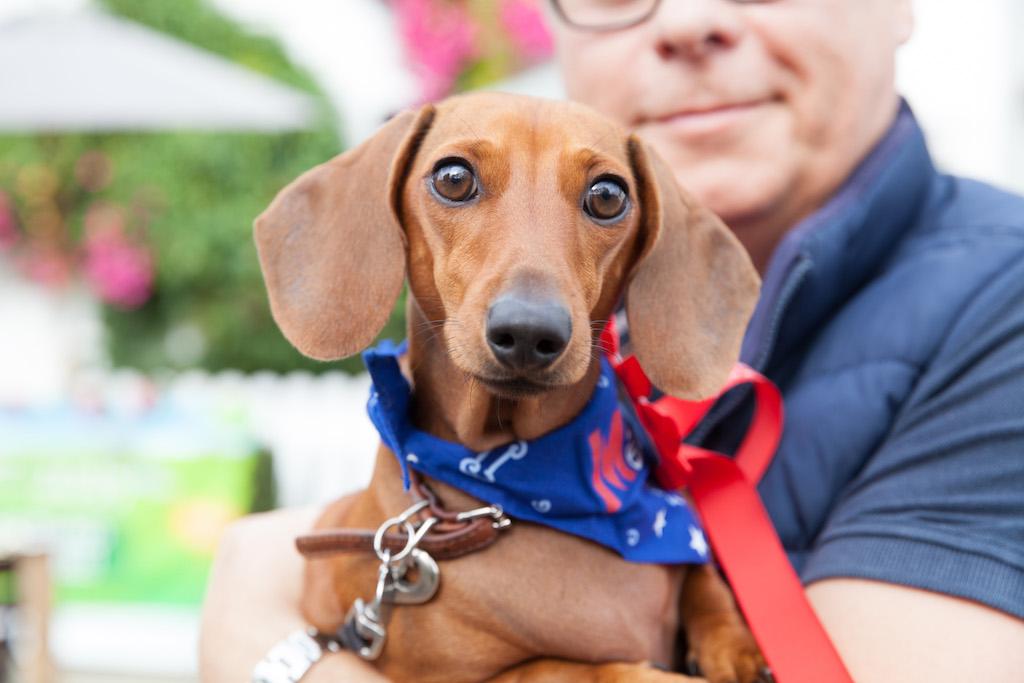 Wimbledon Dog