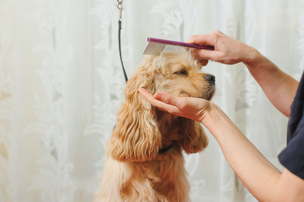 Hair For Pooch